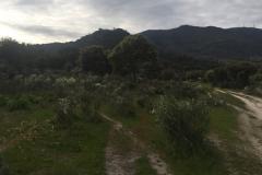 00012PEPE ALBA -Pangea con turismodeljamon.com 4:9:2016