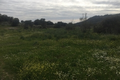 00013PEPE ALBA -Pangea con turismodeljamon.com 4:9:2016