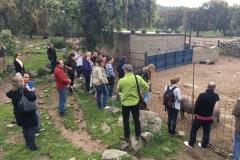 31-03-2017 turismo del jamón - Pepe Alba00008